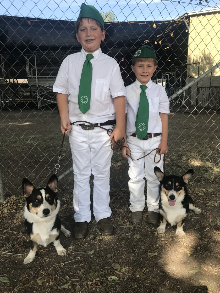 Brothers Cameron Martineau, 9, and Easton Martineau, 6, participated July 24 in the Ramona Jr. Fair with dogs Goose and Bud.