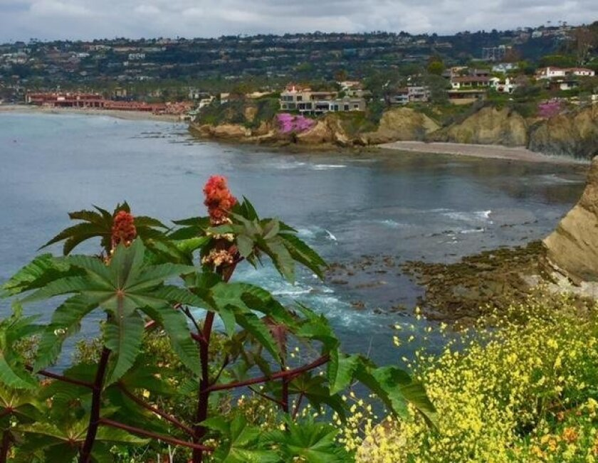 GRAFFITI GONE! Thanks for the La Jolla Light article last week about the recent graffiti and tagging along Coast Walk Trail. I spent a day removing 99 percent of it on Coast Walk. — Chris Cott