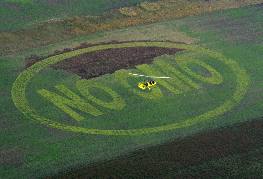 """Activists from Greenpeace and Austrian organic farming association BIO AUSTRIA wrote the message """"NO GMO"""" (Genetically Modified Organism) by planting light green colored organic buckwheat in a field of organic peas in Breitenfurt, near Vienna."""