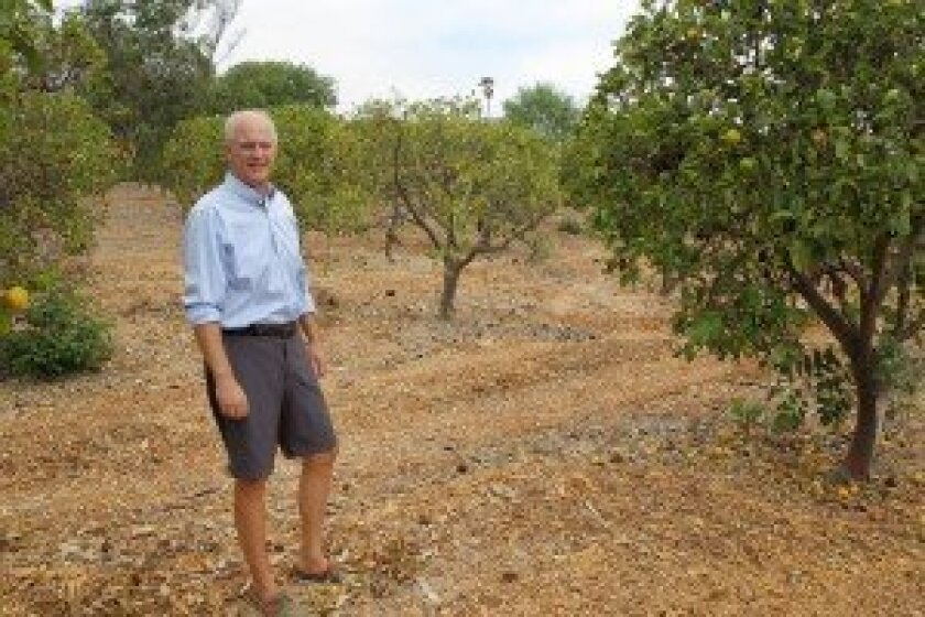 RSF resident Bruce Henderson has about 300 lemon trees on his 3.75-acre Rancho Santa Fe property. Photos by Jon Clark