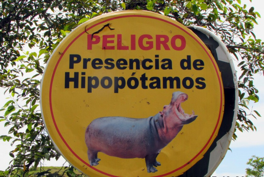 Tourists are warned about hippos that roam Pablo Escobar's Colombian hacienda.