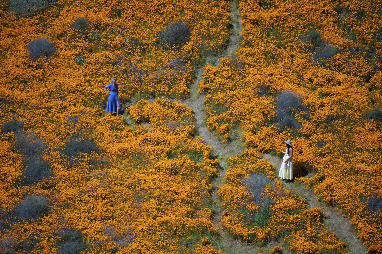 Lake Elsinor poppy fields
