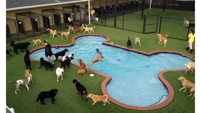 Florida New Upscale Pet Boarding Service To Open Near