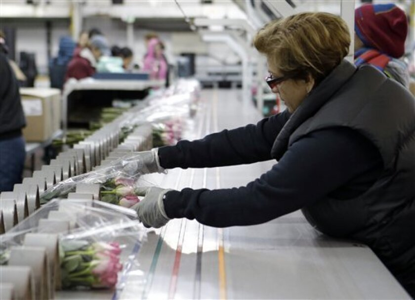In this Thursday, Feb. 7, 2013, photo, workers at a floral import company prepare flowers for distribution to flower resellers throughout the country, in Miami. A measure of U.S. wholesale prices rose in February by the most in five months, pushed higher by more expensive gas and pharmaceuticals. But outside those increases, inflation was mild. The producer price index grew a seasonally adjusted 0.7 percent in February from January, the Labor Department said Thursday, March 14, 2013. That's up f