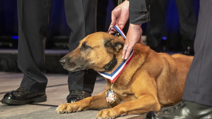 LOS ANGELES, CALIF. -- THURSDAY, SEPTEMBER 27, 2018: LAPD Chief of Police Michel Moore awards K-9 E