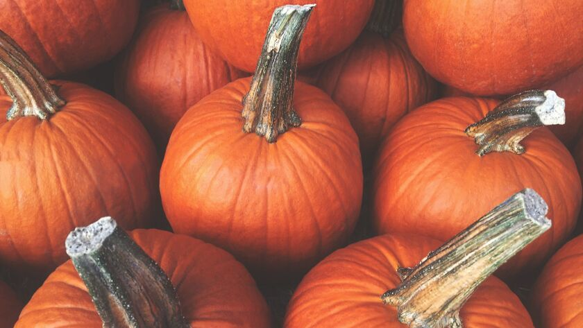 Smaller pumpkins are the best choice for cooking and baking.
