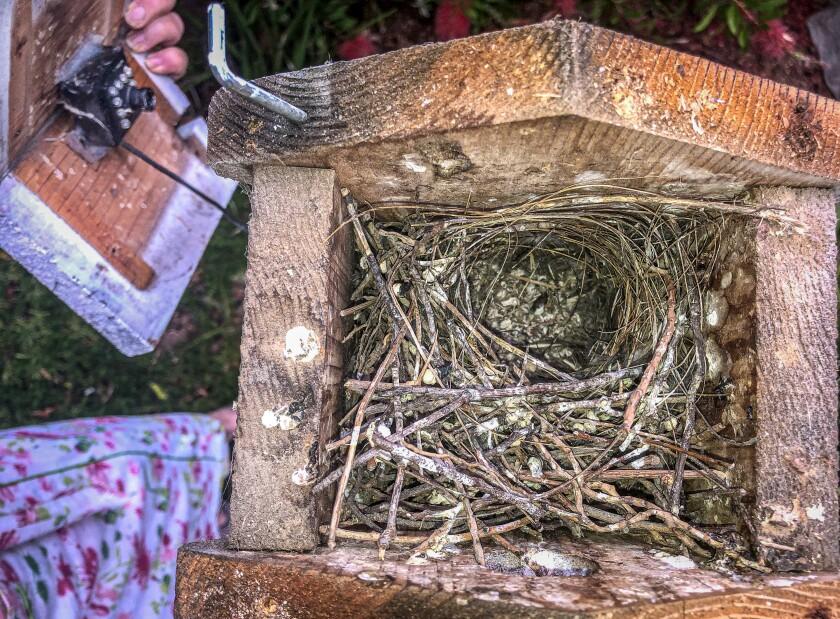 Empty Nest.jpg