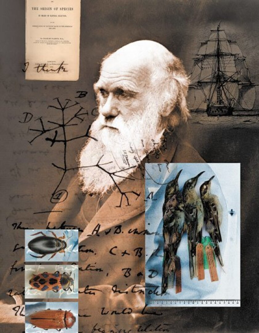 Charles Darwin's contributions to biology evolved from lessons learned  and species collected during a five-year voyage (1831-36) aboard the HMS  Beagle. It was the visible differences between Galapagos mockingbirds —  not finches — that triggered his first ideas about species divers
