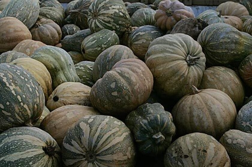 What's hitting its peak in October? Winter squash. Cutting into a squash can be half the challenge -- some varieties have skins so tough they seemingly require a hammer and chisel. But your diligence will be rewarded. Click here for details.