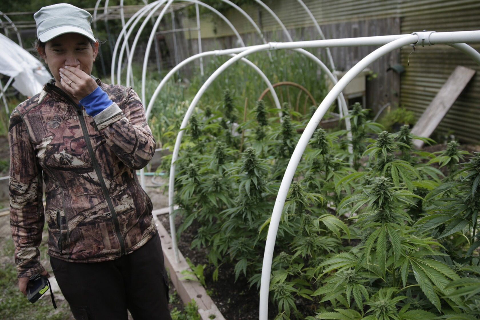 North Coast marijuana growers fear a takeover by 'Big