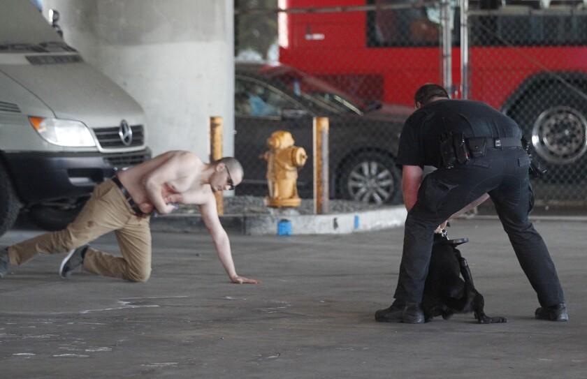 Assault suspect arrested