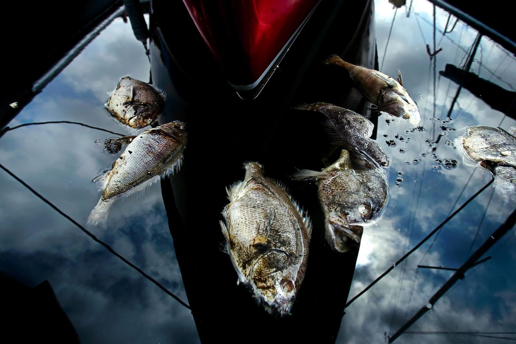 Altered Oceans: Part Four: Plague of Plastic Chokes the Seas - Los