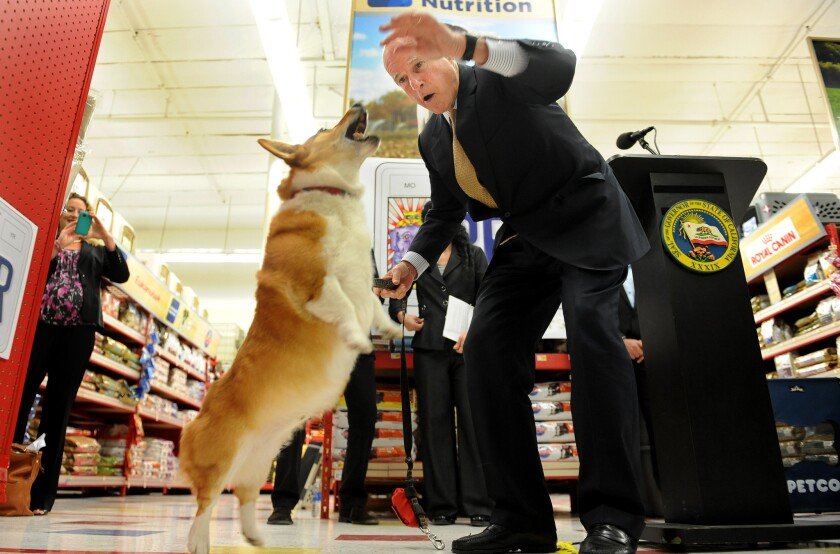 Gov. Jerry Brown gives his dog, Sutter, a snack before a Los Angeles news conference to promote the California Pet Lover's License Plate in 2012.