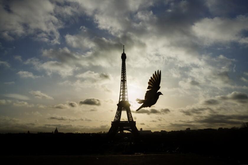 Un pichón vuela frente de la Torre Eiffel, cerrada al acceso público, en el primero de tres días de duelo nacional en París, el domingo 15 de noviembre de 2015. (Foto AP/Daniel Ochoa de Olza)