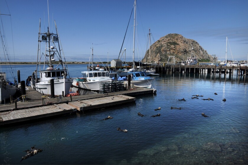 Marina at Morro Bay in San Luis Obispo County.