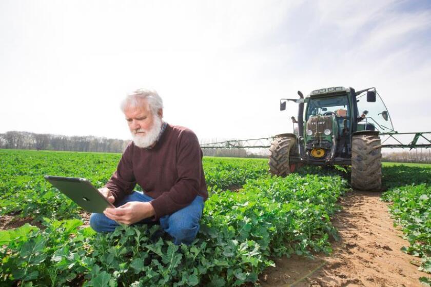 Fotografía sin fecha específica cedida por la compañía alemana Bayer del agrónomo de Bayer, Rolf Schmidt, mientras utiliza los datos del sistema de agricultura digital en un campo de colza de semillas oleaginosas alemanas. EFE