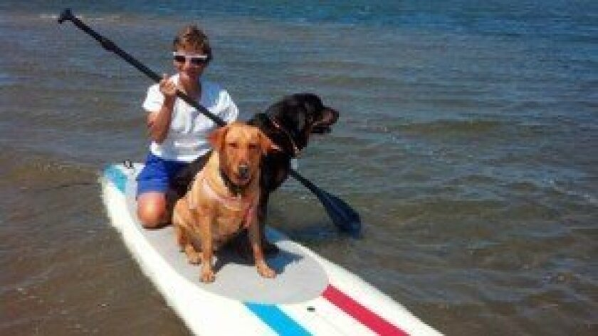 Judy Swain with Luke and Klaus on a paddleboard.