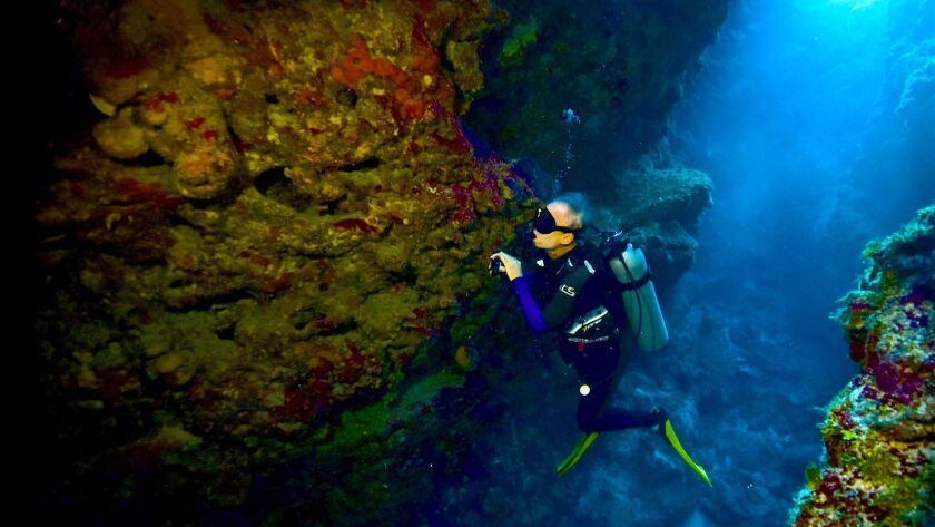A diver's delight in the Cayman Islands - Los Angeles Times