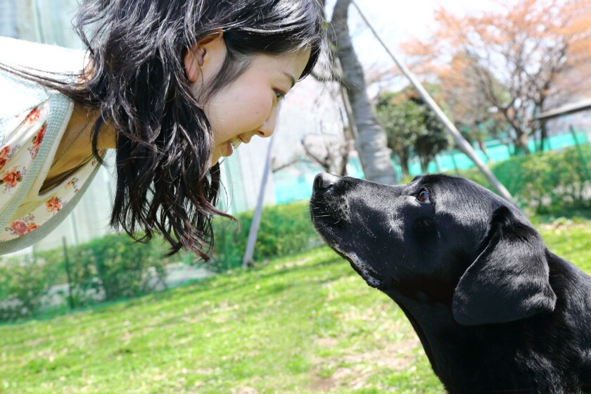 """When they look into the eyes of their human companions, dogs have perfected that """"you are everything to me"""" gaze that makes the human brain flood with oxytocin, the hormone of love, nurture and parenthood, a new study finds."""