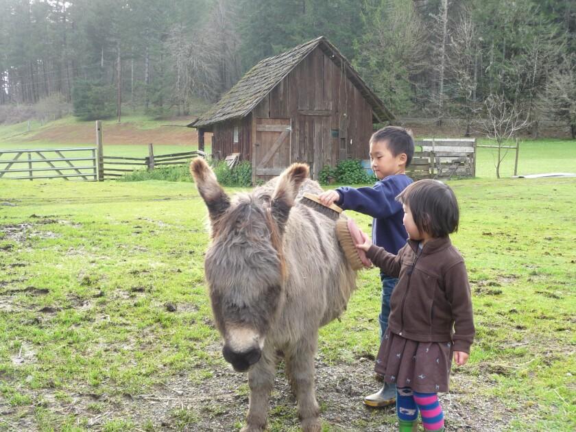 A barnyard encounter at Leaping Lamb Farm in Alsea, Ore.