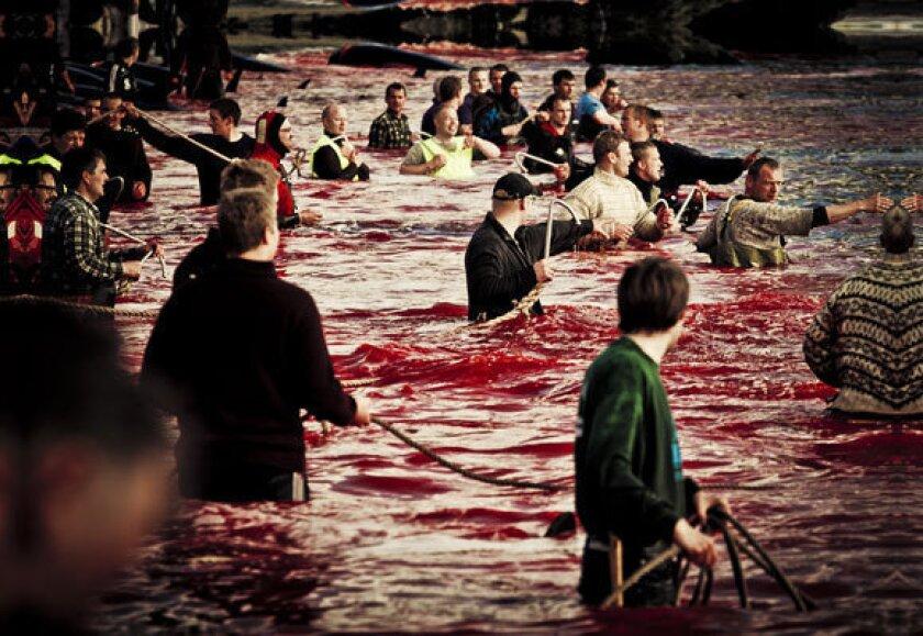 """'Whale Wars"""" Paul Watson on Faroes killing, online debate"""