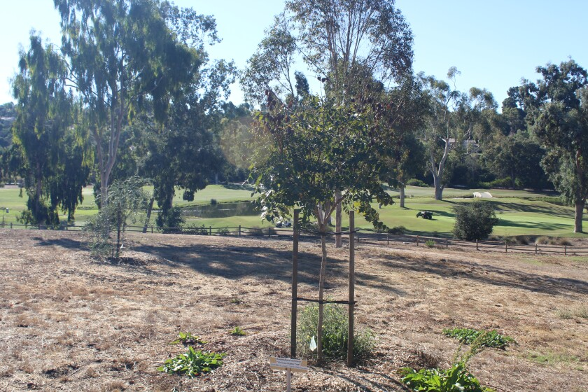 The Rancho Santa Fe Association's Forest Health and Preservation Committee