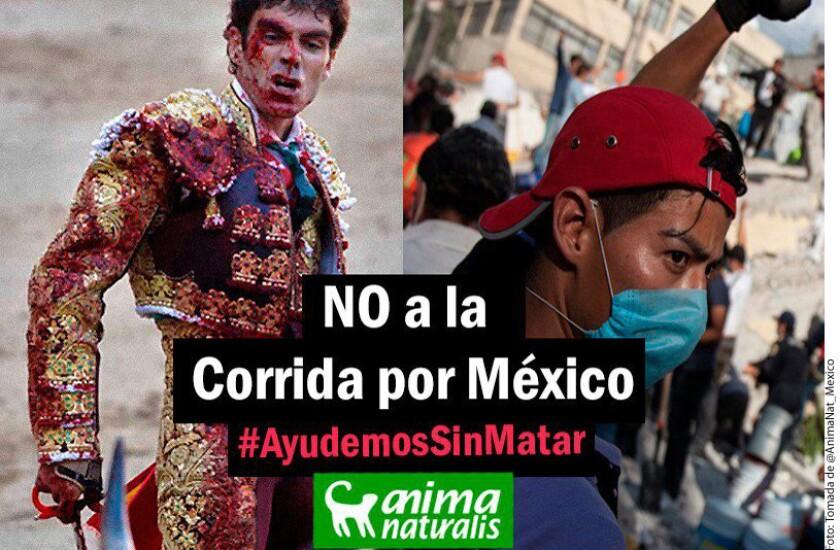 La organización internacional AnimaNaturalis reprobó que se realice una corrida de toros este martes y condenó que se señale en beneficio de damnificados cuando no se ha aclarado la forma en que se les apoyará.