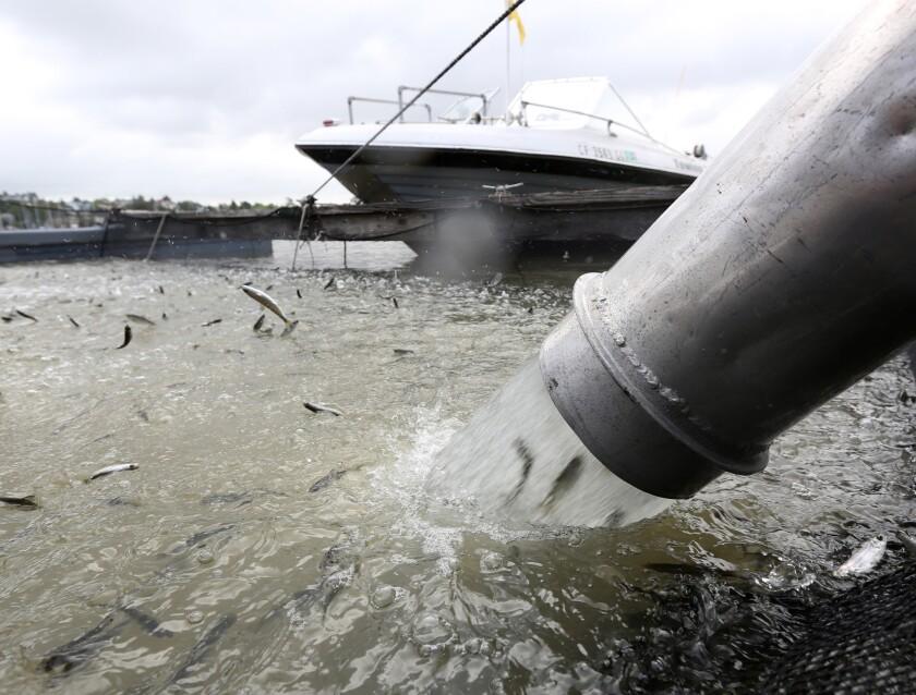 Fish hatcheries evacuated