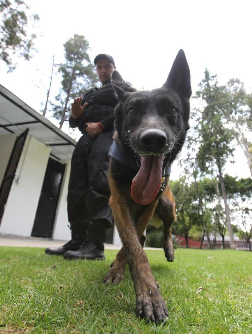 Jako: Mexican lawmakers' best friend and protector