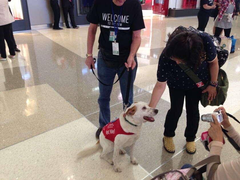 Los Angeles International Airport supports a program to use dogs to reduce stress among frazzled travelers. United Airlines has expanded a similar program.