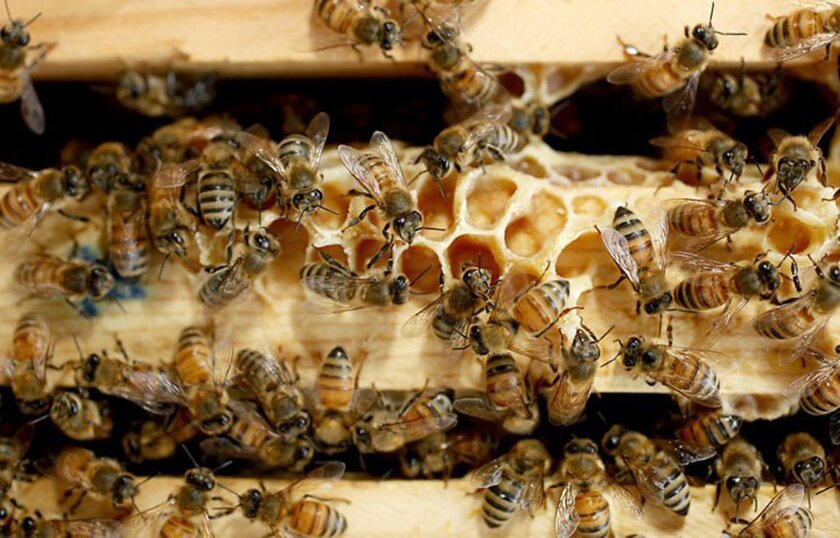 'Bee-friendly' insecticide
