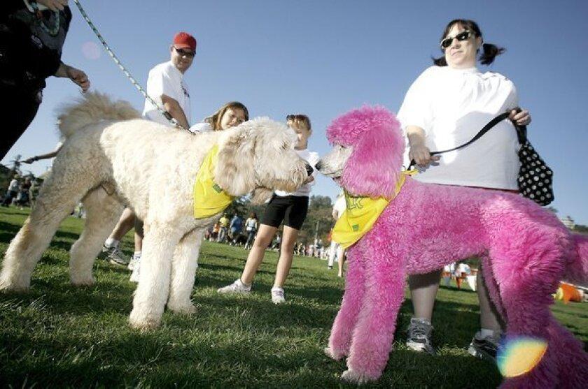 Wiggle Waggle Walk raises funds for the Pasadena Humane Society