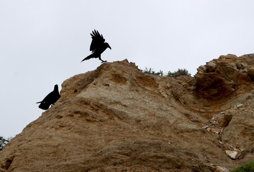 tn-dpt-me-raven-rick-20200112-4