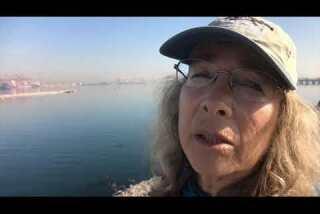Dead female fin whale found at Port of Long Beach