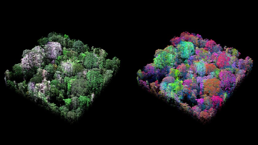 A side-by-side view of a single hectare of forest. On the left, the forest image is rendered in natural color. On the right, trees are rendered in the spectral colors of the forest, revealing the species diversity in one area of the forest.