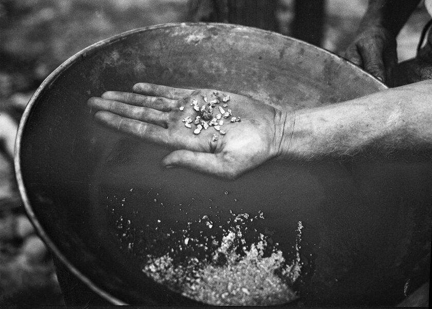 A prospector holds a number of small gold nuggets found in the East Fork of the San Gabriel River.