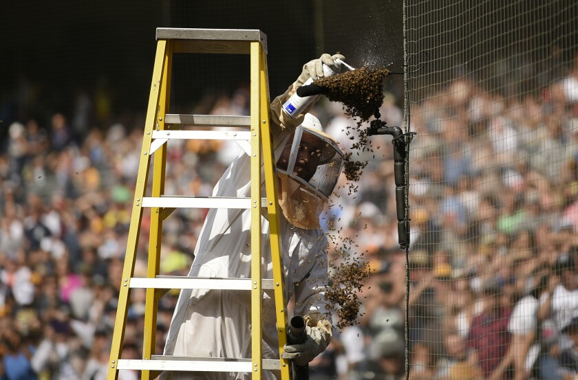 Trent Polcyn sprays a bee swarm on a microphone on the field which caused a delay during the third inning of a baseball game between the Miami Marlins and the San Diego Padres on Sunday.