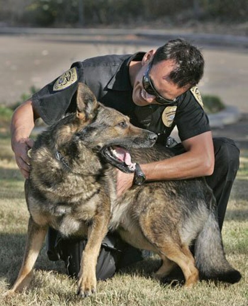 National City police Officer Omar Ramirez works as a K9 handler with Seven, a German shepherd. A recent lawsuit claimed the city violated federal laws by not paying overtime for dog care after officers' shifts ended. (John Gibbins / U-T)