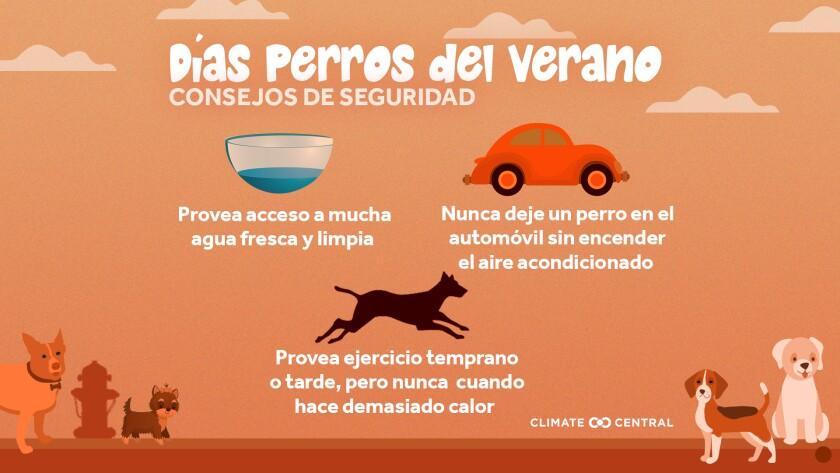 Con el cambio climático haciendo que nuestros veranos sean más calurosos y largos, las mascotas pueden estar en mayor riesgo de males relacionados al calor y el pavimento ardiente.
