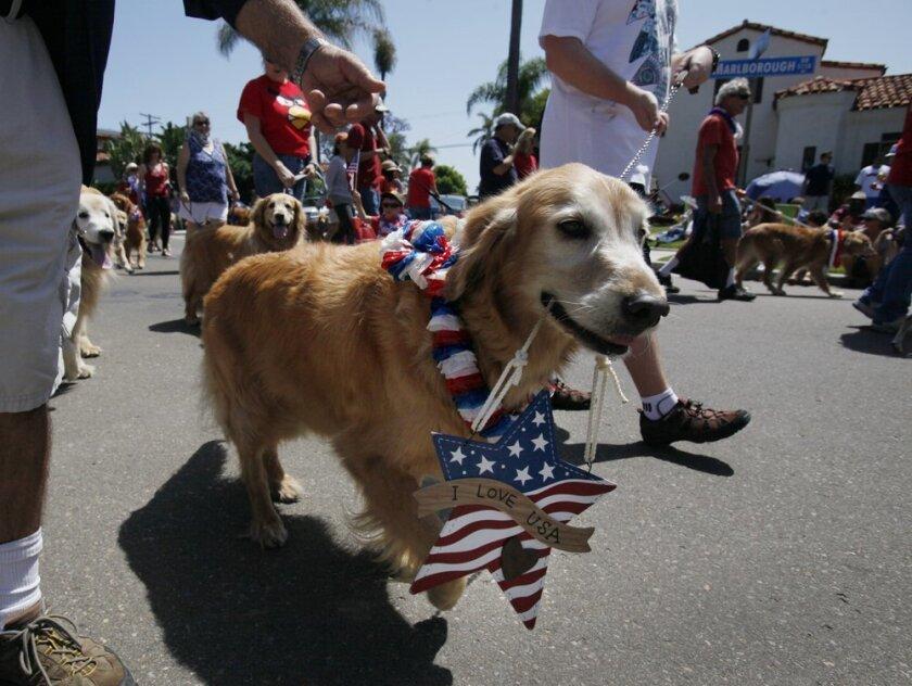 Ben, the golden retriever, led the San Diego Golden Retriever Meetup Group in the Kensington Memorial Day parade.