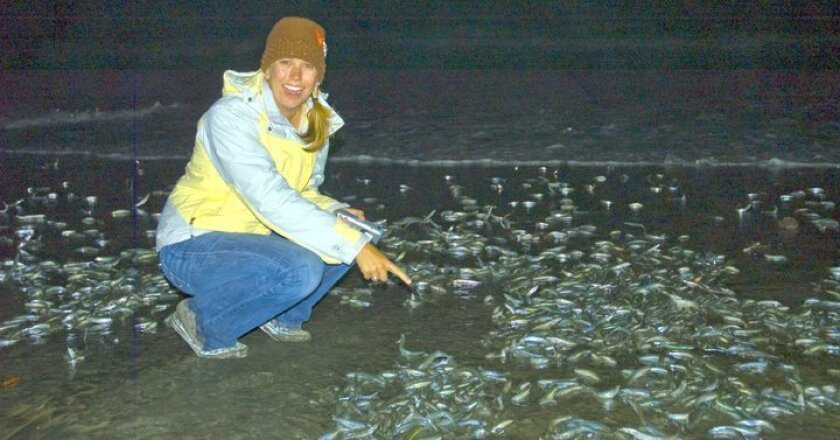 Grunion-run participant Shannon Casey poses with the stars of the show along La Jolla's beaches during the nighttime activity hosted by Scripps Institution of Oceanography.