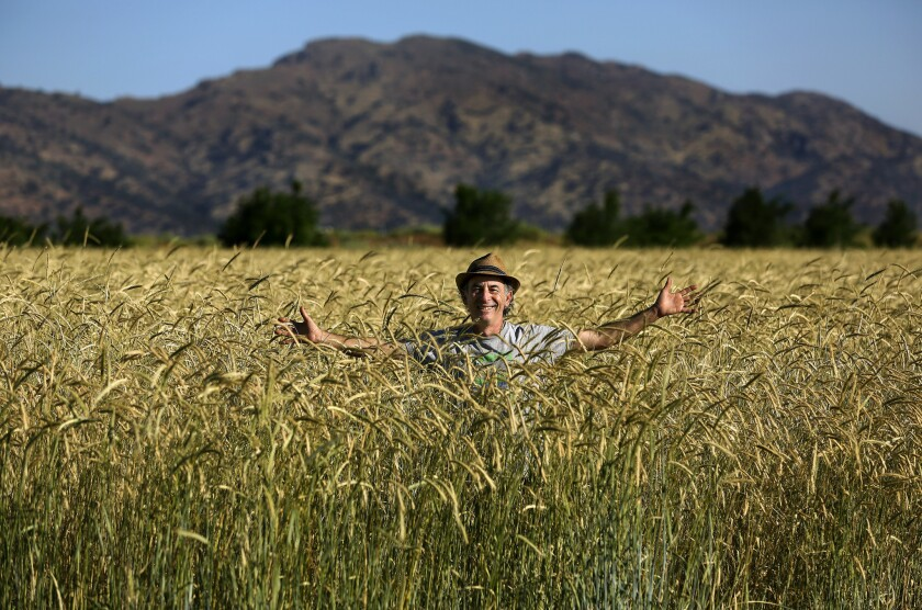 Alex Weiser stands in a field of Abruzzi rye, growing at Weiser Family Farms in Tehachapi. Weiser is co-founder of the Tehachapi Heritage Grain Project.