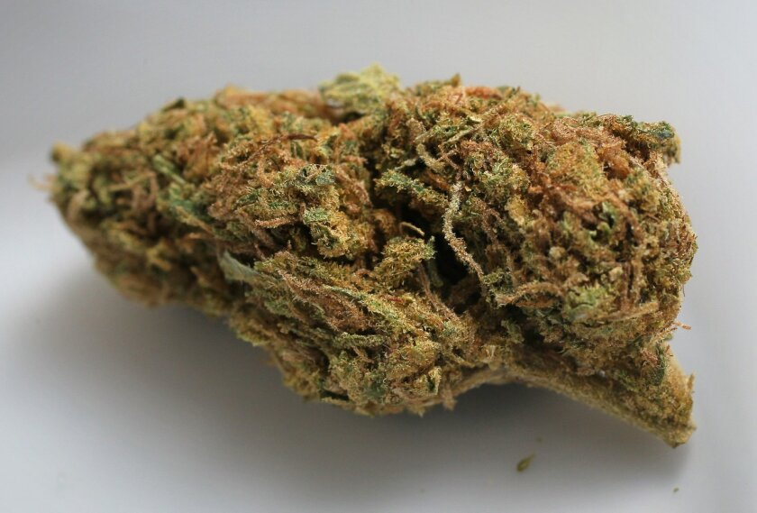 A cannabis flower submitted for testing at PharmLab in Ocean Beach.