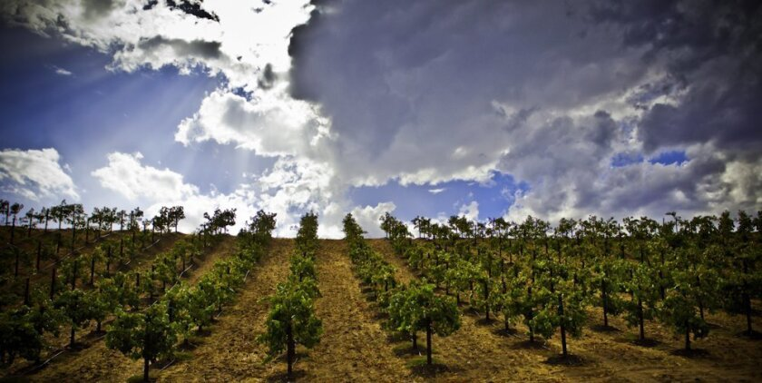 Temecula Valley is thick with vineyards, wineries -- and breweries.