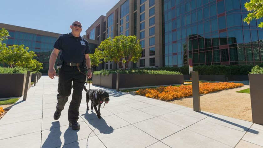 John Tipton of Vista and his service dog Daisy do their rounds at Pechanga Resort & Casino in Temecula. The 22-year Marine Corps veterans and his dog are the first of nine human-canine security teams Pechanga plans to hire.