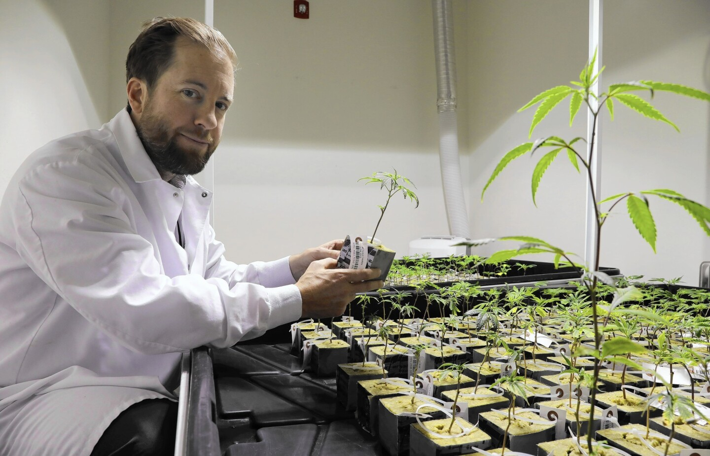 Charlie Bachtell, CEO and co-founder of Cresco Labs, checks on young cannabis plants Dec. 19, 2016, at Cresco Labs' Joliet facility. Cresco is a medical marijuana company.