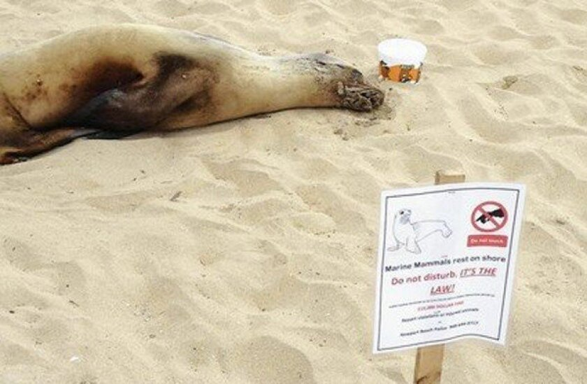 Residents help out sea lion stranded on Newport Beach boardwalk