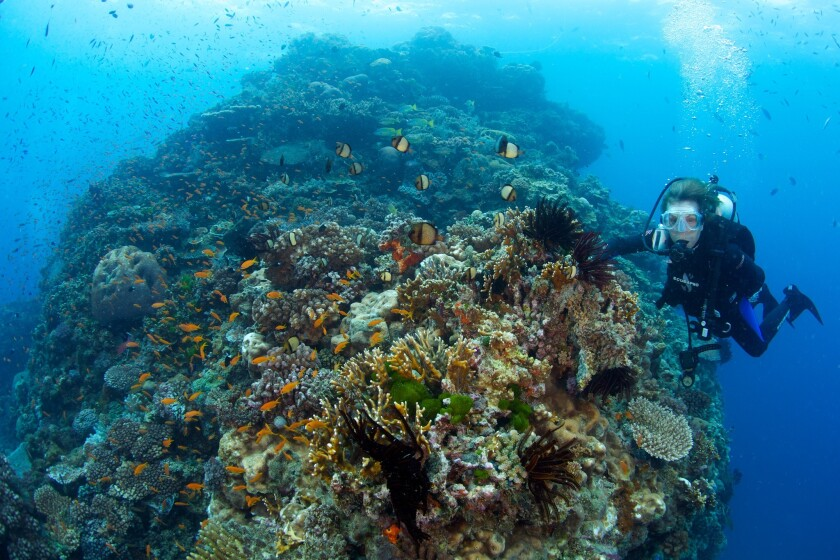 """Dr. Sylvia Earle in a scene from the documentary """"Mission Blue."""""""