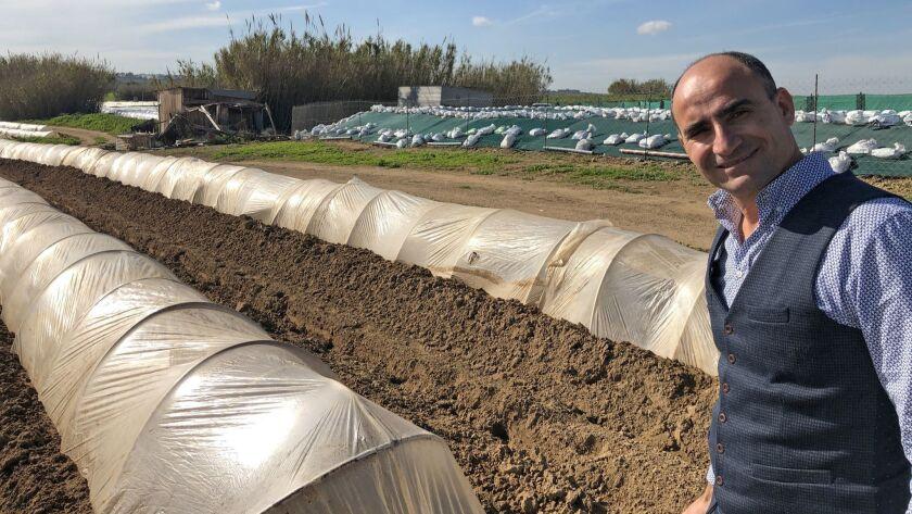 Deryneia Mayor Andros Karayiannis checks on organic farming in UN Buffer Zone in the Republic of Cyprus near his town.