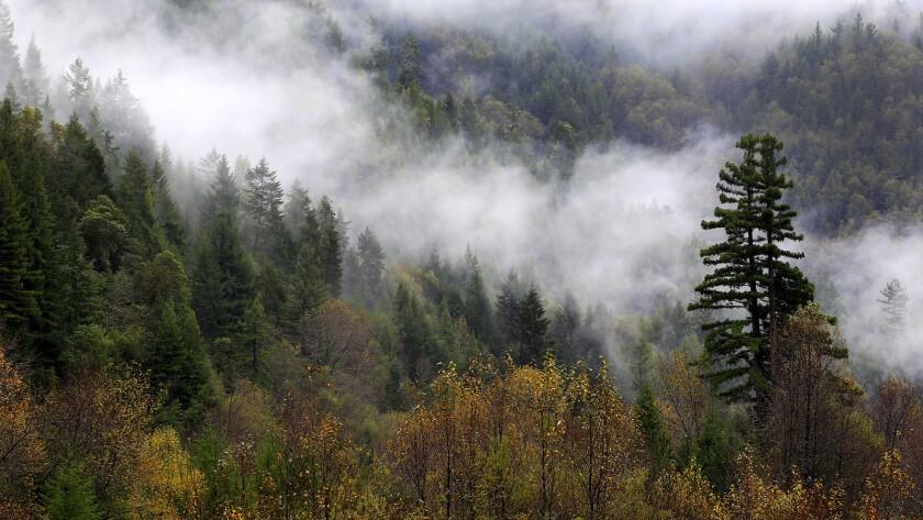 Mist rises over the trees after a November rain near Klamath.